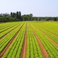 Agricoltura e ambiente nel Guangdong